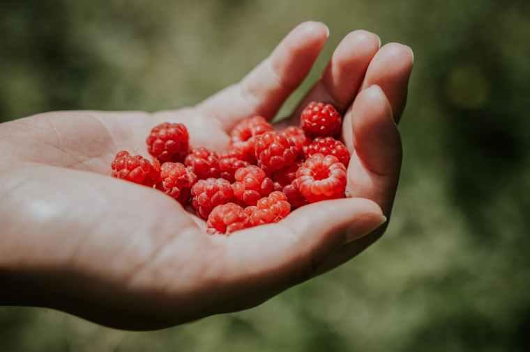 person holding raspberries